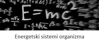 energetski-sistemi-organizma